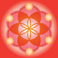 Red seed of a flower of life Stock Photo