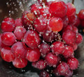 Red Seedless Grapes Stock Photo