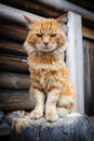 Red serious cat sitting on wooden trunk Stock Photos