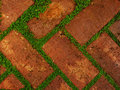 Red shaded bricks with gaps filled by leafy green growth Royalty Free Stock Photo