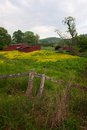 Red sheds in flower field a pair of a of buttercup flowers Royalty Free Stock Photos