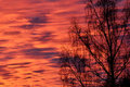 Red sky background and tree Royalty Free Stock Photo