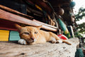 A red sleepy cat lounges on a bench in a bar near the beach Royalty Free Stock Photo