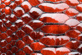 Red snake skin. Royalty Free Stock Photo