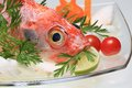 Red snapper fish with herbs Royalty Free Stock Images