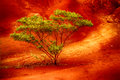 The red soil of kauai a beautiful tree in canyon area Royalty Free Stock Photo