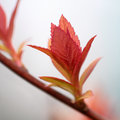 Red spring leafs Stock Photos