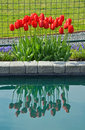 Red spring tulips reflection beautiful reflected in water Stock Images