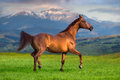 Red stallion trotting Royalty Free Stock Photo
