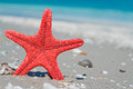 Red star and blue sea starfish by the shoreline Royalty Free Stock Photo