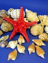 Red star and shells Royalty Free Stock Image