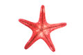 Red starfish closeup view of a reddish or sea star class asteroidea isolated Stock Photography