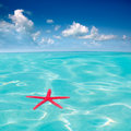 Red starfish floating on perfect tropical sea Stock Image