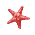 Red starfish isolated on white Stock Photography