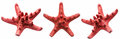 Red starfish isolated on white background Royalty Free Stock Photo