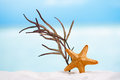 Red starfish with ocean,  white sand beach, sky and seascape Royalty Free Stock Photo