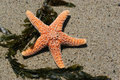Red Starfish on Sand Royalty Free Stock Photos