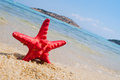 Red starfish on the sandy beach with sea in the background Stock Photography