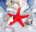 Red starfish, sea slugs and sea shells Royalty Free Stock Photo