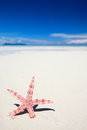 Red starfish on tropical beach Stock Images