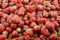 Red strawberries, full frame, close up Royalty Free Stock Photo