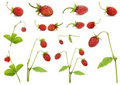 Red strawberry berries and bushes set Stock Photo