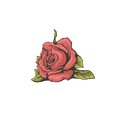 Red stylized rose isolated on white background. Royalty Free Stock Photo