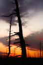 Red sunset outlined at bog Stock Image