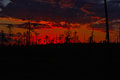 Red sunset outlined at forest bog Royalty Free Stock Image