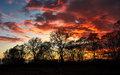 Red sunset over the trees Royalty Free Stock Photo
