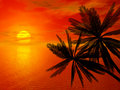 Red sunset and palm Stock Photos