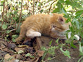 Red tabby cat amidst vegetation Royalty Free Stock Image