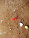 Red tack and staples on bulleting board bulletin cork with Stock Photography