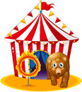 A red tent at the back of a bear and a flaming ring illustration on white background Stock Photo