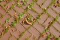 Red terra cotta brick pattern Royalty Free Stock Photo