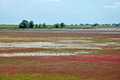 Red tinted vegetation growing on salt saturated land danube delta romania Royalty Free Stock Photos