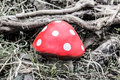 Red toadstool a in a forest Stock Photography