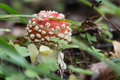 Red toadstool macro on autumnal background