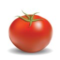 Red tomato colorful illustration with for your design Royalty Free Stock Images