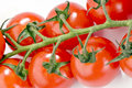 Red tomatoes on the branch Royalty Free Stock Photo
