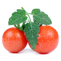Red tomatoes with green leaf and water drops isolated on white background two cherry a a square image Stock Photo