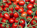 Red tomatoes organically grown on the vine background Royalty Free Stock Photo