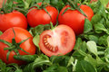 Red tomatoes surrounded by fresh green mache lettuce Stock Images