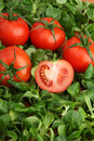 Red tomatoes surrounded by fresh green mache lettuce Stock Photos