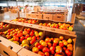 Red tomatoes on vegetable processing factory Royalty Free Stock Photo