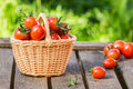 Red tomatoes in wicker basket on  wooden table Royalty Free Stock Photo