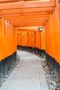 the red torii gates walkway at fushimi inari taisha shrine in Ky