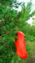 red travel sleeping bag hanging on the green pine trees Royalty Free Stock Photo