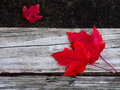 Red trio Royalty Free Stock Photo
