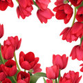 Red Tuilp Flower Frame Stock Photos